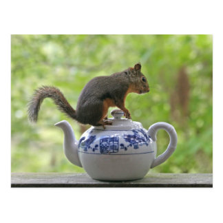 Squirrel on a Teapot Postcard