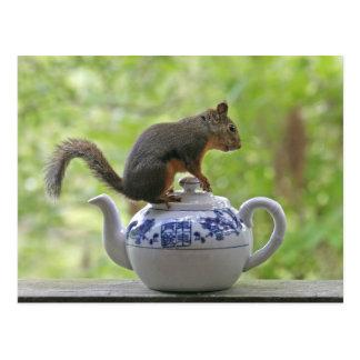 Squirrel on a Teapot Postcard