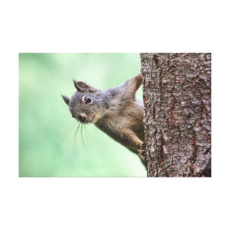 Squirrel On a Tree Gallery Wrapped Canvas