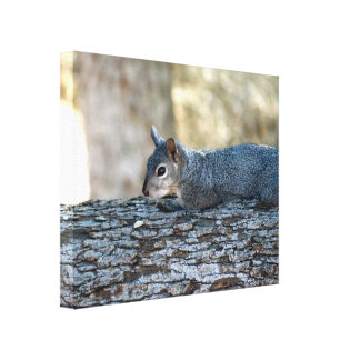 Squirrel On A Tree Gallery Wrap Canvas