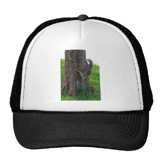 Squirrel on a Tree Mesh Hats