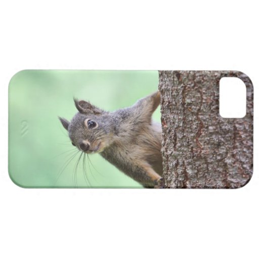 Squirrel On a Tree iPhone 5 Cover