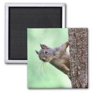 Squirrel On a Tree Magnet