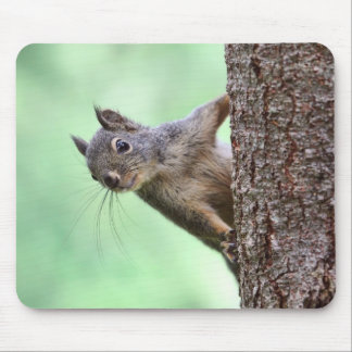 Squirrel On a Tree Mouse Pad