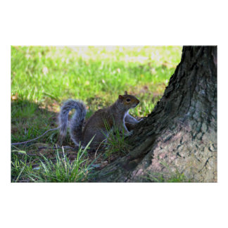 Squirrel on a Tree Poster Print