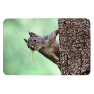Squirrel On a Tree Vinyl Magnet