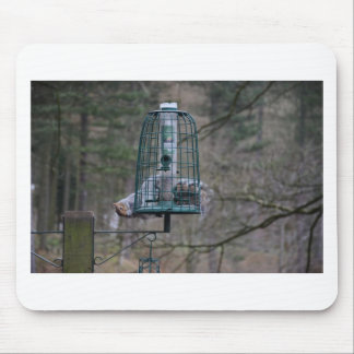 Squirrel on bird feeder mouse pad