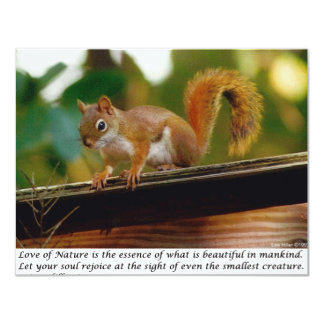 Squirrel On Branch Photography Gift & Collectibles 4.25x5.5 Paper Invitation Card