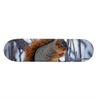 Squirrel on Branches Covered in Winter Snow Ice Skateboard