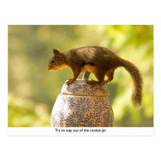 Squirrel on Cookie Jar Postcard