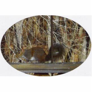 Squirrel on Deck Rail 2 Cutout