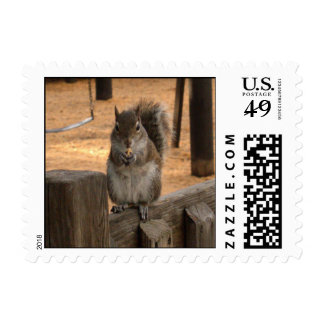 Squirrel on fence stamps