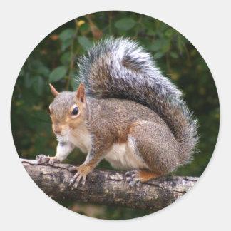 Squirrel On Limb Classic Round Sticker
