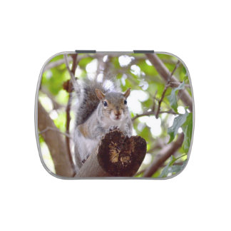 squirrel on log cute animal c jelly belly tin