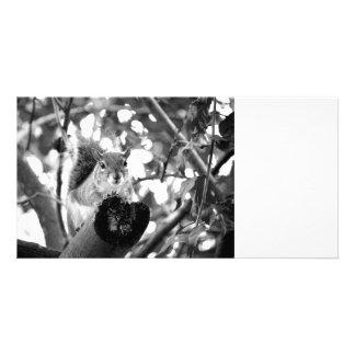 squirrel on log cute bw animal photo card template