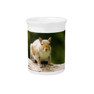 Squirrel on log drink pitchers