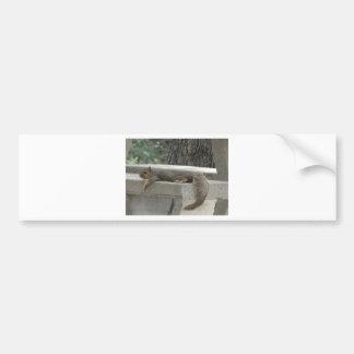 Squirrel on picnic table bumper sticker