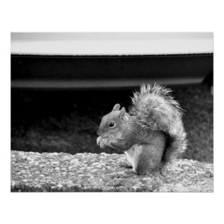 Squirrel on Rock Path Poster Print (Black and Whit