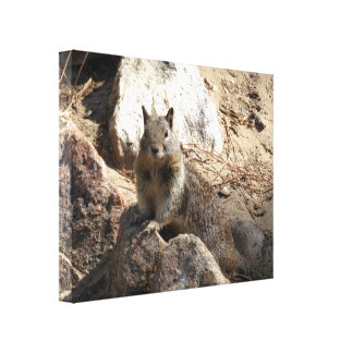 Squirrel On Rocks Gallery Wrapped Canvas