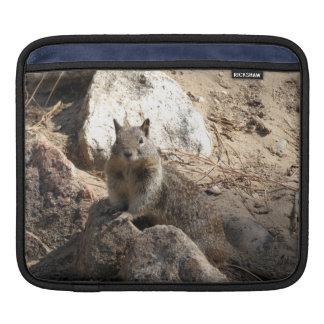 Squirrel On Rocks iPad Sleeves