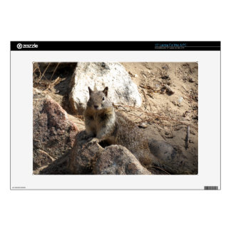 "Squirrel On Rocks Skins For 15"" Laptops"