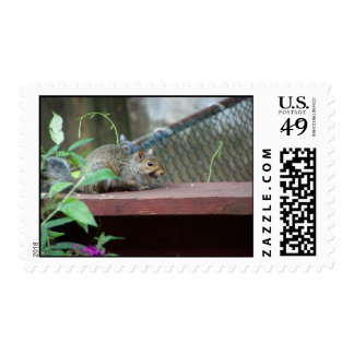 Squirrel on the deck - Stamps