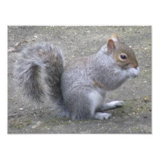 Squirrel on the Graden Path Photo Print