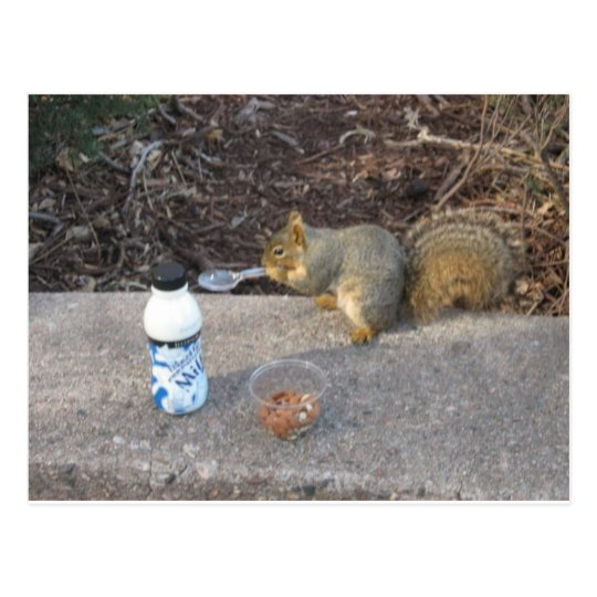 Squirrel on The Loose Postcard