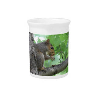 squirrel on the tree pitcher