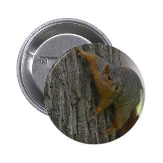 Squirrel On Tree 2 Inch Round Button