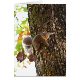 Squirrel on Tree Cards