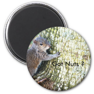 Squirrel on Tree, Got Nuts ? Fridge Magnet