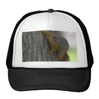 Squirrel On Tree Trucker Hat