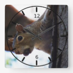 Squirrel on Tree with Nut in Mouth, Closeup Wallclock