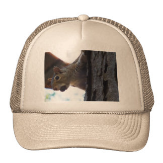 Squirrel on Tree with Nut in Mouth, Closeup Trucker Hat