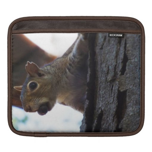 Squirrel on Tree with Nut in Mouth, Closeup iPad Sleeves