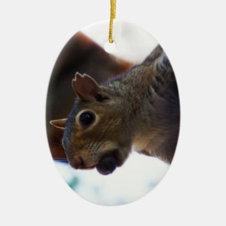 Squirrel on Tree with Nut in Mouth Closeup Christmas Ornaments