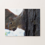 Squirrel on Tree with Nut in Mouth, Closeup Jigsaw Puzzle