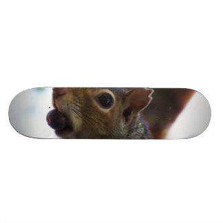 Squirrel on Tree with Nut in Mouth, Closeup Custom Skateboard