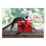 Squirrel Opening Christmas Present Cards