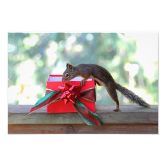 Squirrel Opening Christmas Present Photo Print
