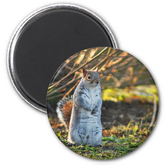 Squirrel or a Meerkat? Magnet