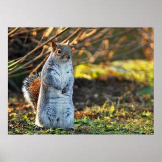 Squirrel or a Meerkat? Posters