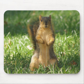 Squirrel Out In The Grass Photo Mouse Pad