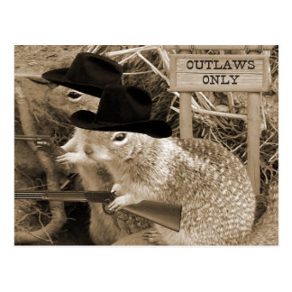 Squirrel Outlaws In The Old West Postcard