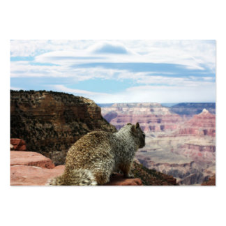 Squirrel Overlooking Grand Canyon, Arizona Business Cards