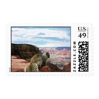 Squirrel Overlooking Grand Canyon, Arizona Postage