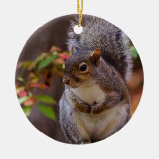 Squirrel Patiently Begs Ceramic Ornament
