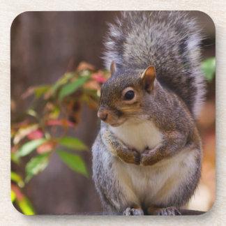 Squirrel Patiently Begs Drink Coaster