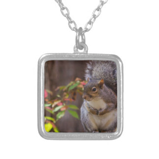Squirrel Patiently Begs Silver Plated Necklace